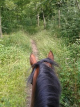 Hacking through the woods