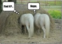 Funny-Pictures-Horse-Find-Something