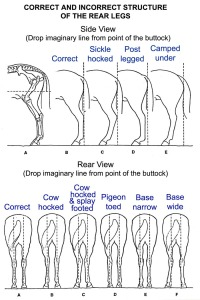 horse-rear-leg