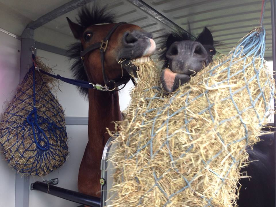The Hay is Always Tastier on the Other Side